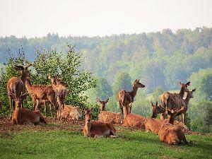 Rajd rowerowy szlakiem Wiecherta ze zwiedzaniem Fermy jeleniowatych