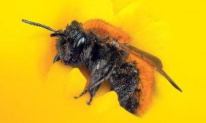 Wielki Dzień Pszczół