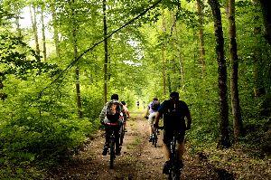 Rajd rowerowy do Puszczy Boreckiej