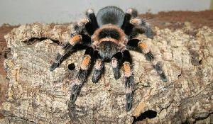 Wystawa pająków i skorpionów w Mrągowie
